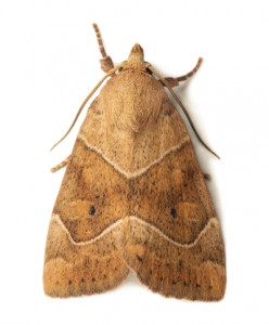 Moth Removal Nottinghamshire